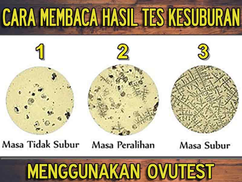 PROMO Alat Test Kesuburan Ovutest di Malang